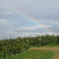 Empty orchard with rainbow